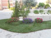 mini giardino