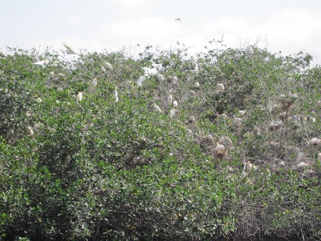 La Somone es un lugar de importante riqueza ornitológica
