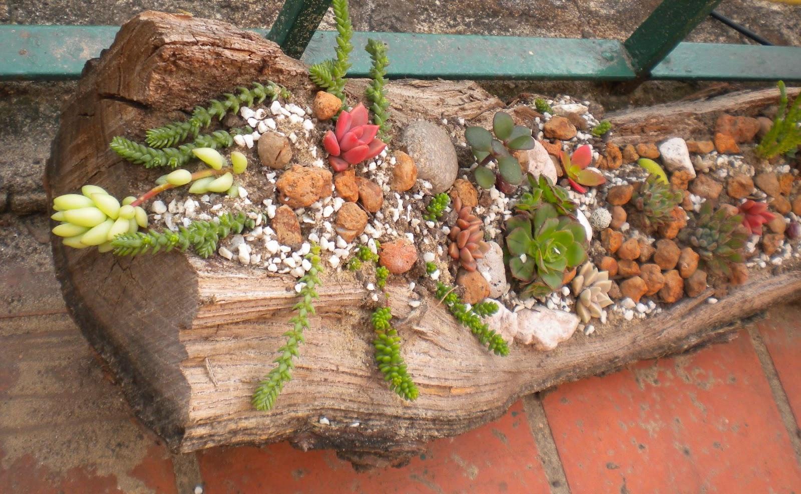 En armon a con la naturaleza mini jard n de suculentas y for Jardines con piedras y troncos