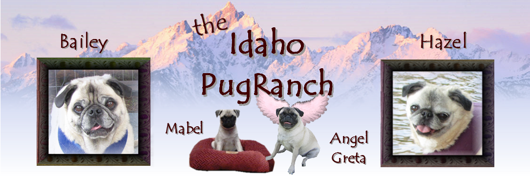 Idaho PugRanch