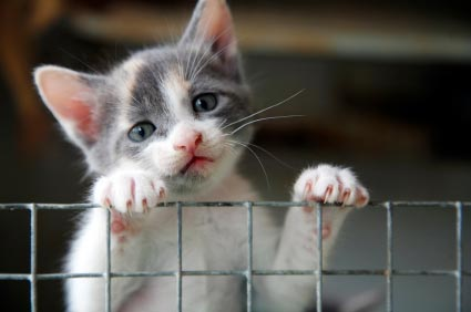lonely sad cat - photo #37