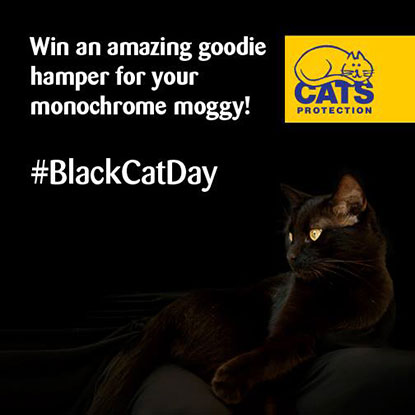 Win a prize for your monochrome moggy
