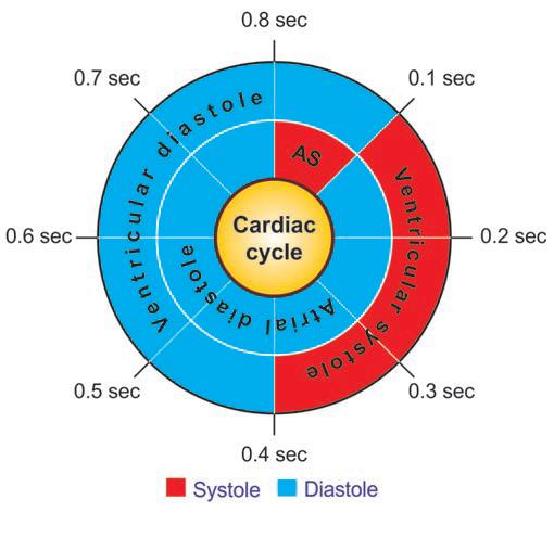 Cardiac Cycle Ventricular Events
