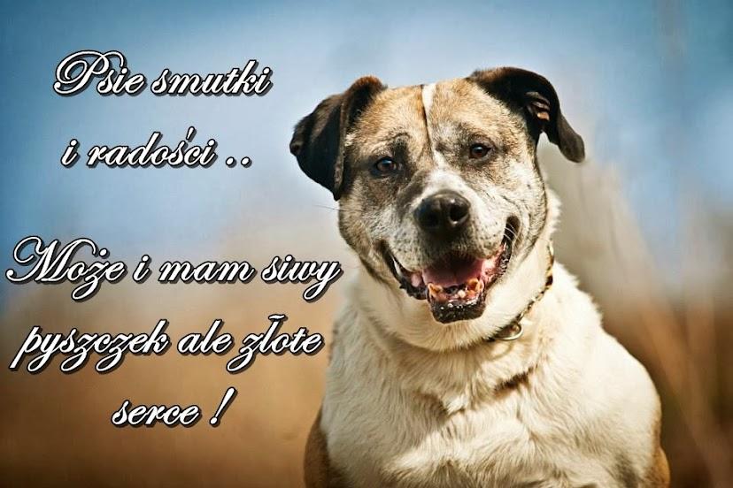 Psie smutki ...