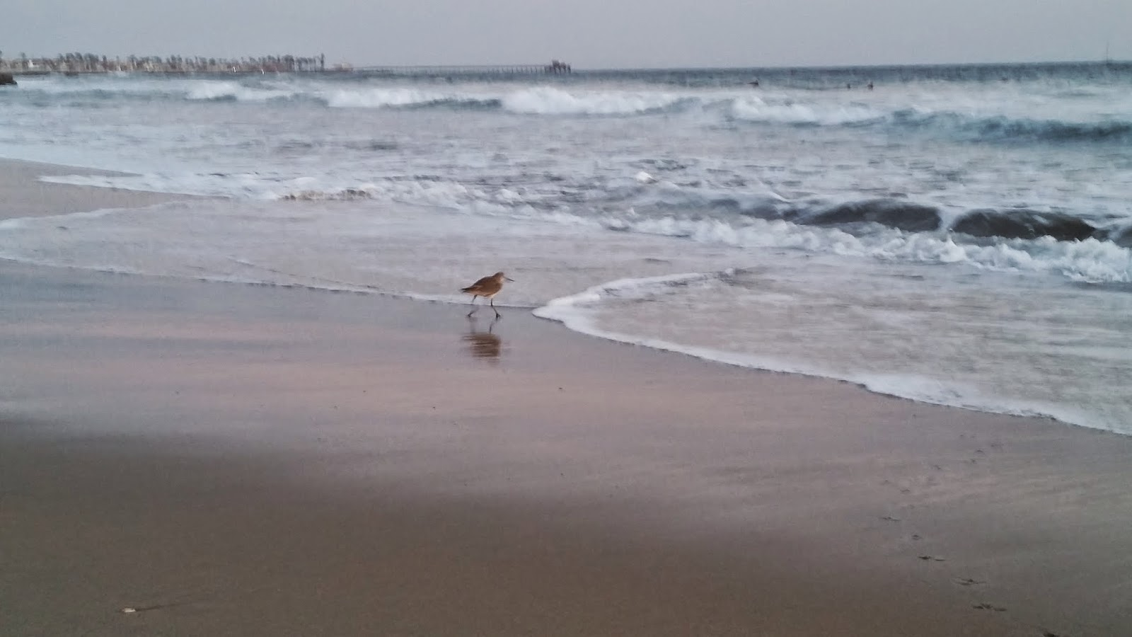 bird at Newport Beach, California
