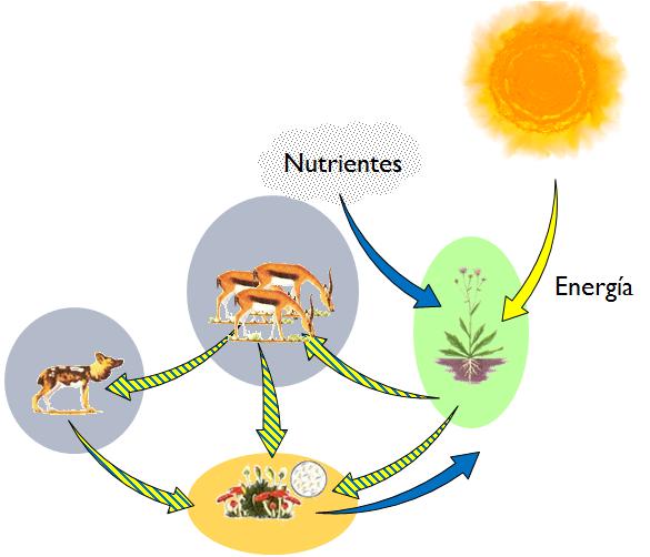 Resultado de imagen de energía solar y los seres vivos