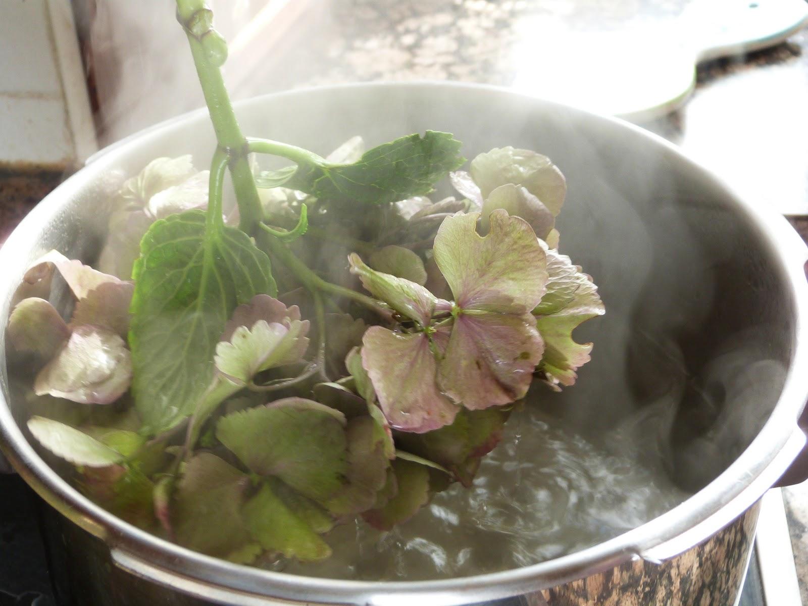 Renovando te ir y secar hortensias - Como secar hortensias ...