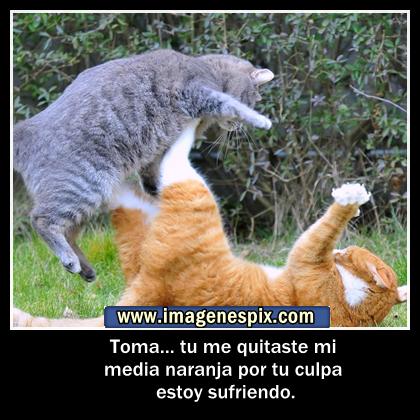 Frases chistosas-graciosas | Divierteme.com