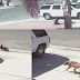 This cat save a child from a rampaging dog attack!