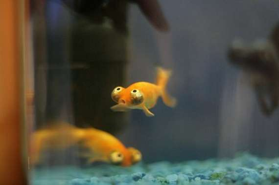 Funny fish funny animals for Funny fish pictures