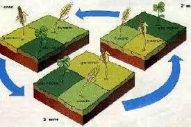 la rotazione delle colture nell 39 orto bronsescoverte