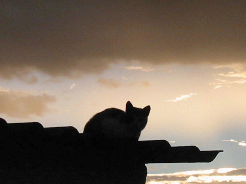 Gato en la Azotea