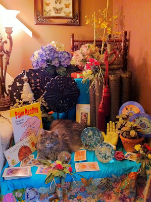 Psychic Cat Cecilia - Stein Your Florist Co.