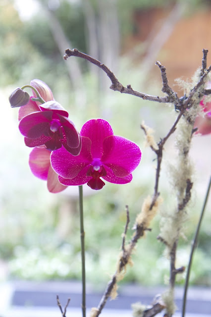 Magenta Orchid and Mossy Sticks; How to Landscape an Orchid; Nora's Nest
