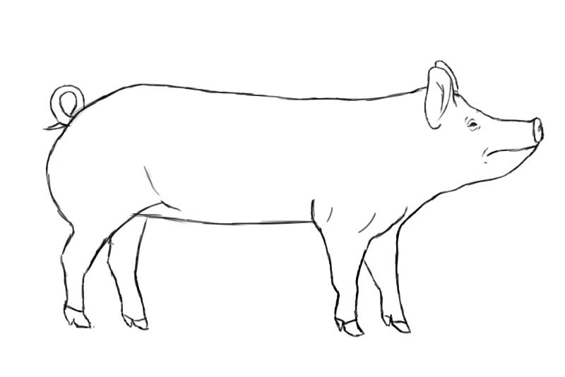 Pig drawing - photo#5