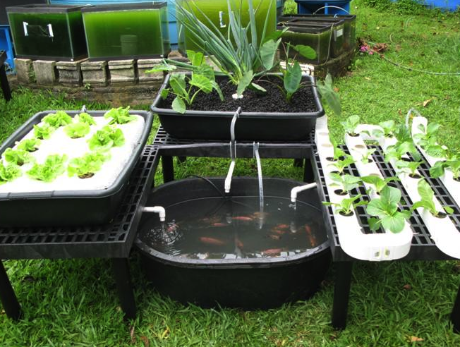 Backyard gardening for profit advance secret revealed for Aquaponics pond design