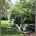 Tree Art, College of William And Mary, Williamsburg, Virginia