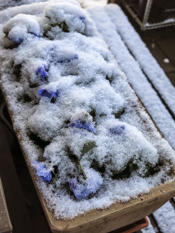 snö, penseer