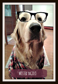 Golden Retriever hipster wearing glasses - Mister Yagolo