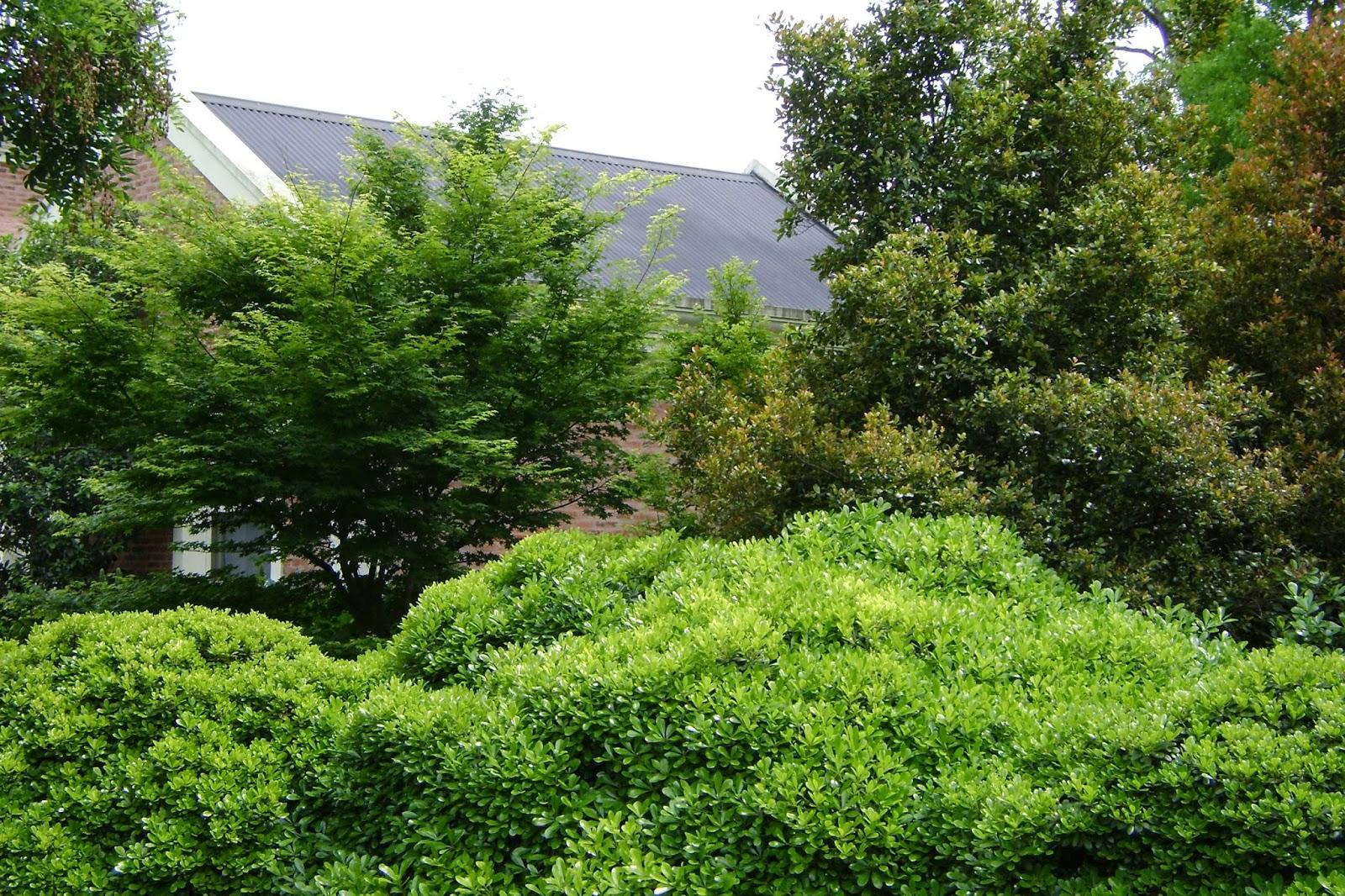 En el jardin cercos tapar hasta d nde for Arbustos enanos para jardin