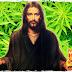 Etimologistas e antropólogos afirmam: ''O óleo da santa unção usado por sacerdotes e Jesus era feito de cannabis''