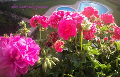 Plantas Alba hogar