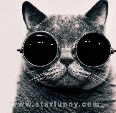 cat with glasses 2014