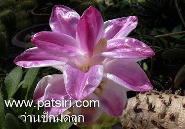 patsirisawaeng