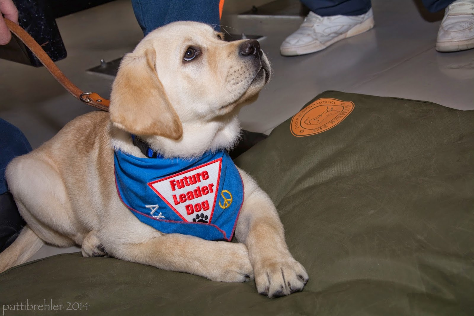 "A young yellow lab puppy is halfway lying on a green dog bed. The pup is wearing a blue bandaa, with the same patch and his name ""Axel"" embroidered on it with a peace sign. The pup is looking up at someone out of view to the right of hte picture. His leash is extented off camera to the left.A pair of feet wearing white shoes are in the background."