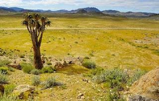 Un desierto poblado de criaturas extrañas