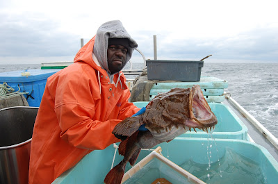 rape-Monkfish
