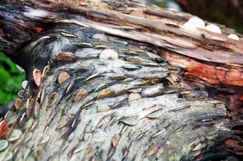 El dinero no crece en los árboles