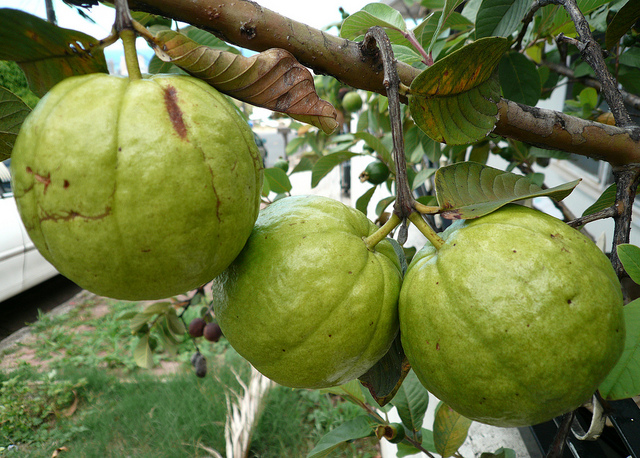 desktop bangladesh fruits pictures - photo #13