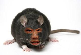 Jong Lee - rat