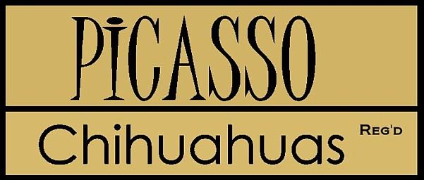 Picasso Chihuahuas