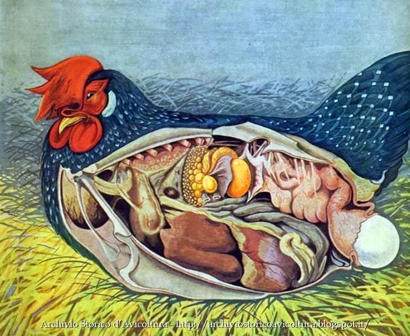 Da cosa dipende il colore del guscio delle uova di gallina? Scopriamolo  insieme! | Oryctes.com - Blog & News