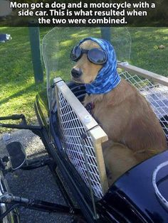 dog meme, dog motorcycle, dog in side car, mom got a dog and motorcycle