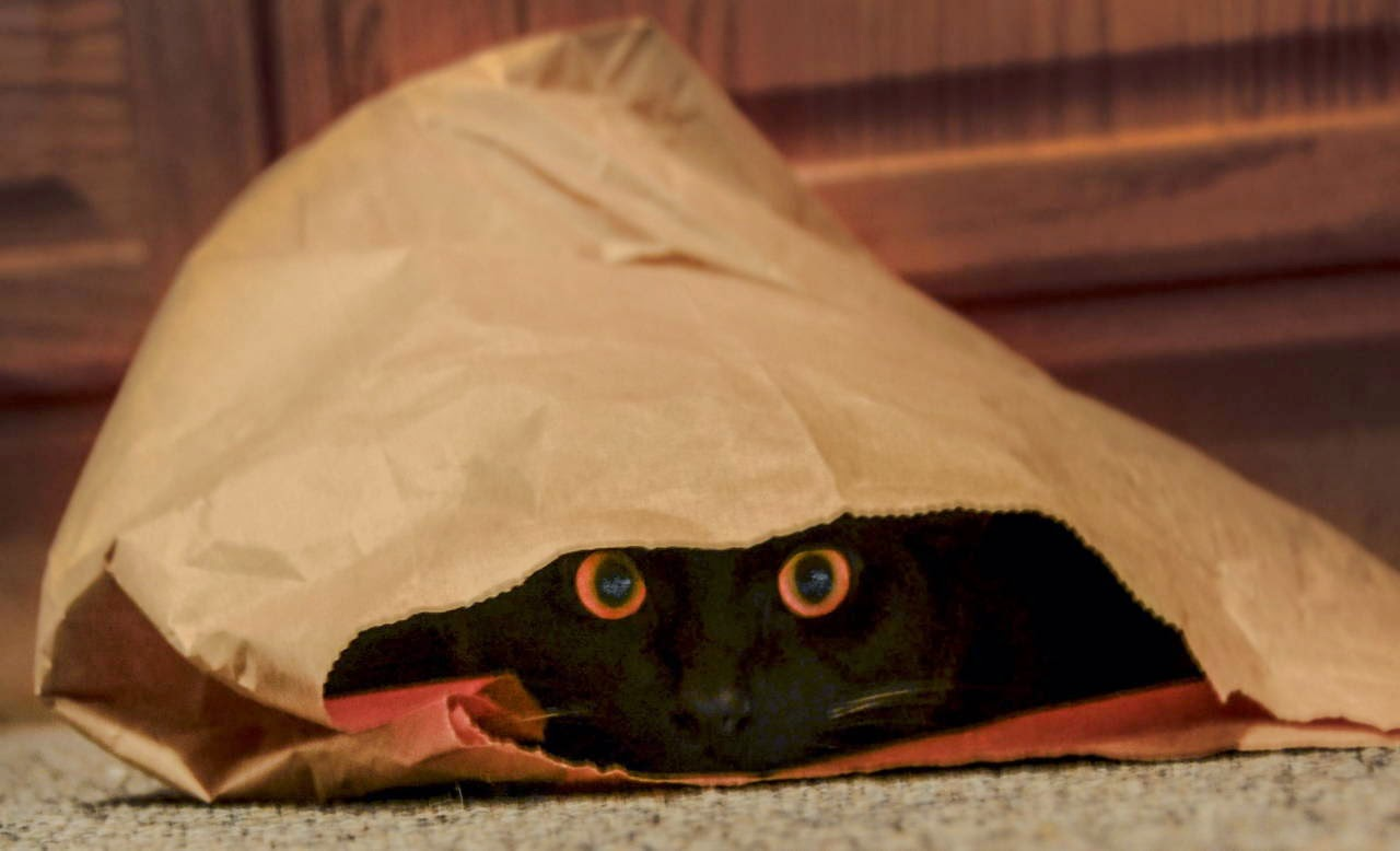 Funny cats - part 99 (40 pics + 10 gifs), cat pictures, cat hiding inside paper bag