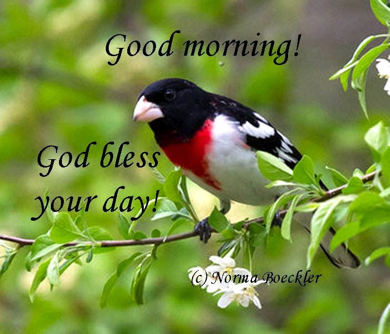 Good Morning Beautiful Birds Images : Sassy sue and friends is welcome at lowe s