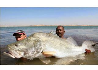 الاسماك الكبيرة  في البحر