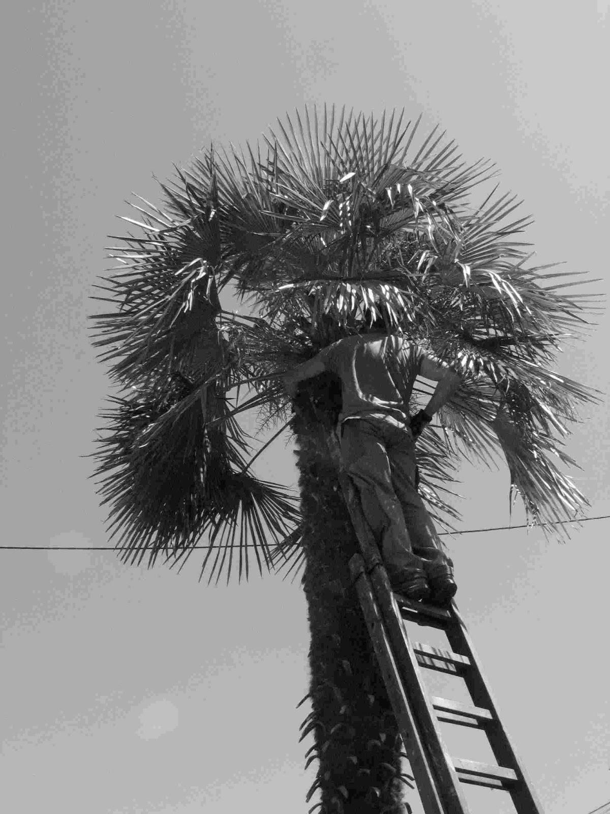 Bleu delphinium taille d 39 entretien d 39 un palmier - Entretien d un palmier ...