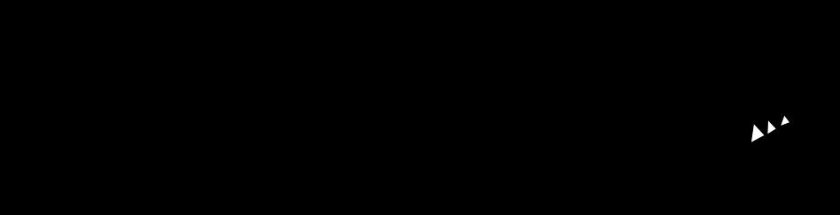 Ursus Ludens