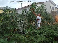 De terrenos baldios a horta de verduras