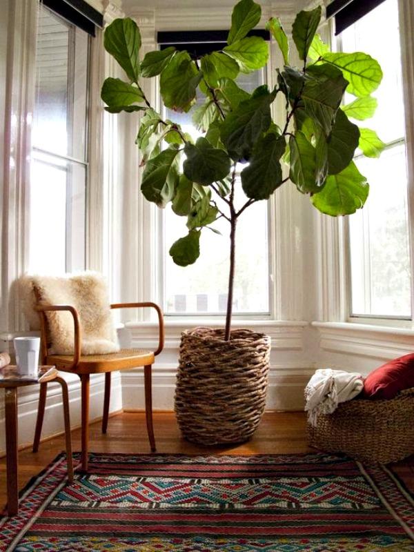 MountainMama Boho Style And Houseplants
