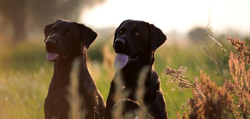 Zwei Hundeleben...