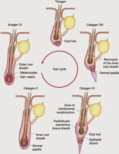 Propecia length of treatment