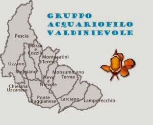 Gruppo Acquariofilo Valdinievole
