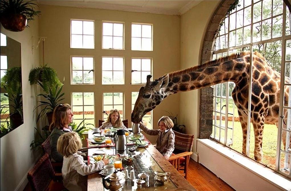 فندق الزرافة مانور، كينيا