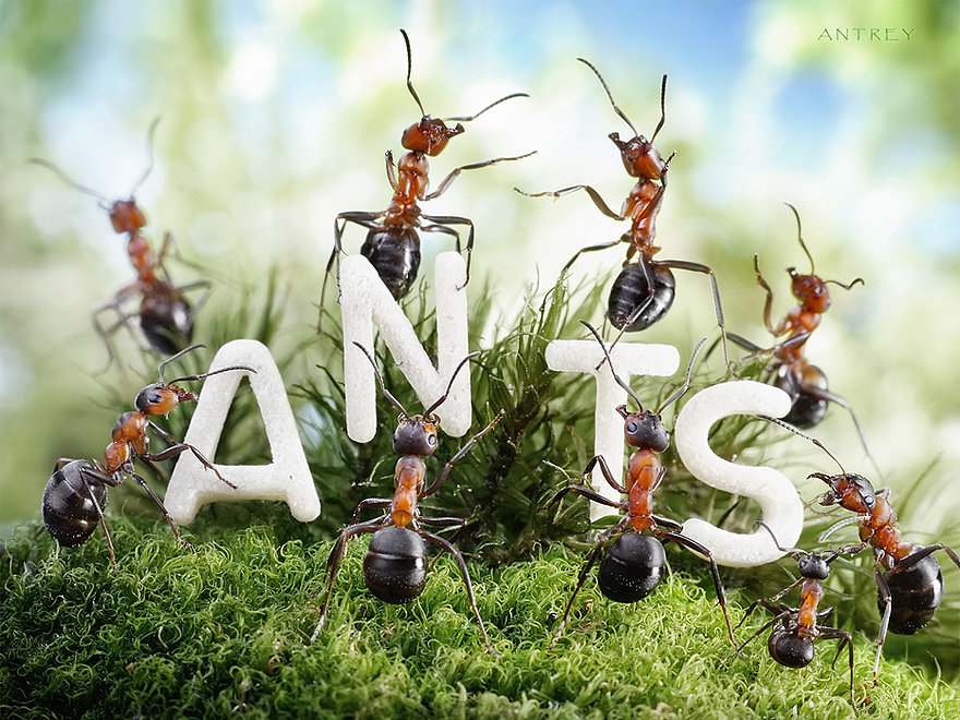 20-We-are-the-Ants-Andrey-Pavlov-Photographs-of-Ants-an-Affordable-Journey-to-a-Parallel-World