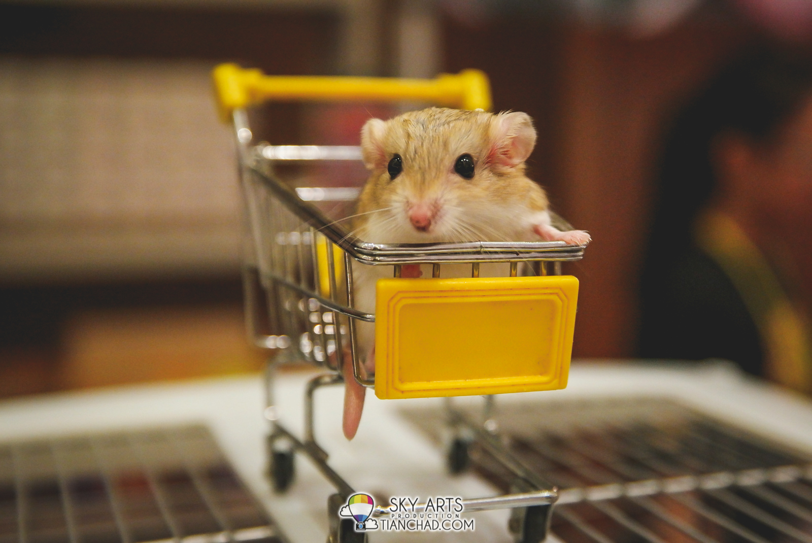 Cute mouse with long tail in a trolly